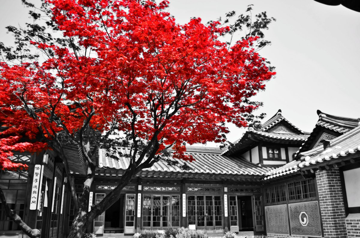 Colour Splash Photography